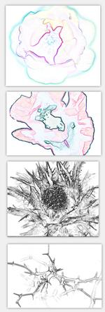 Blumen Zeichnen Lernen Anleitung Tipps Für Die Blumenzeichnung