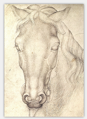 Pferde zeichnenlernen: Tipps für die gekonnte Pferdezeichnung