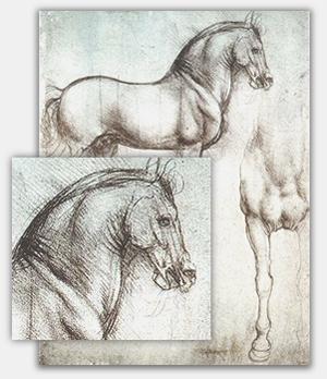 pferde zeichnenlernen tipps f r die gekonnte pferdezeichnung. Black Bedroom Furniture Sets. Home Design Ideas